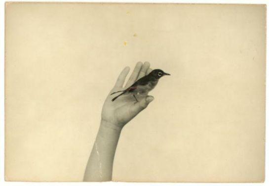 Masao Yamamoto: Unsettling Beauty